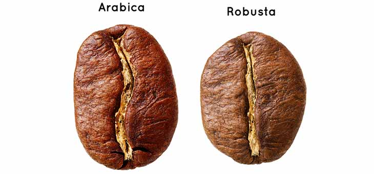 arabica bean and robusta bean next to each other