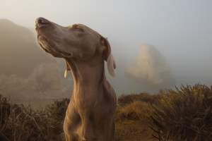 dog-smell-sniff-scent-coffee-freshness-outdoors